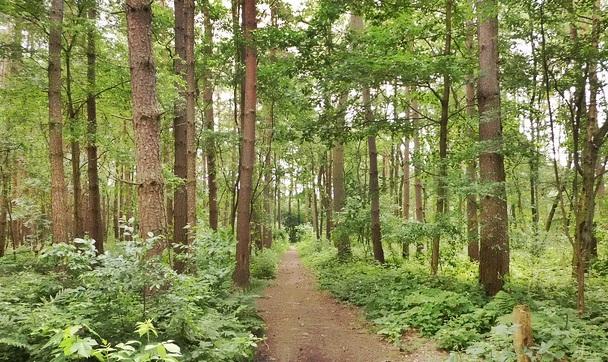 Интересные факты о растениях лесных зон