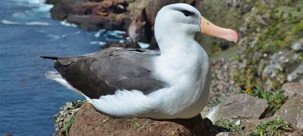 Интересные факты о птице альбатрос