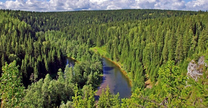 Интересные факты о лесах России