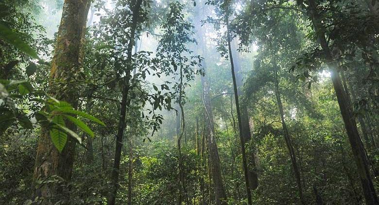 Интересные факты об экваториальных лесах Южной Америки