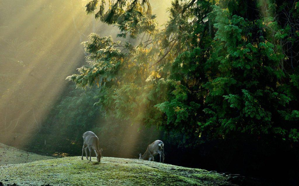 Интересные факты о природе и животных